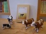 牛たち.jpg